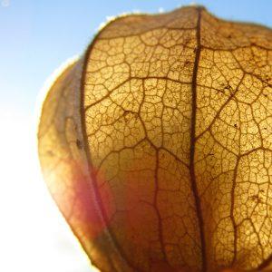 Balance kommt aus dem Bauch Das vegetative Nervensystem als Basis für die Gesundheit
